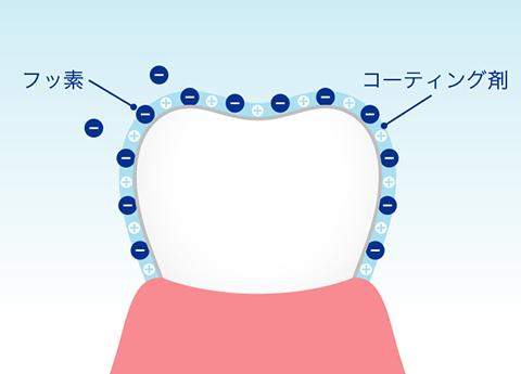 https://www.s-shika-clinic.com/asset/img-fluorine_nokosu02.jpg